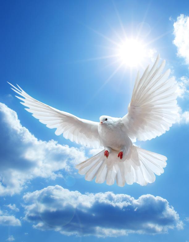 Be ye holy; for I am holy - Matthew Henry